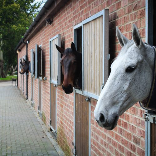 Highnam Court Equine Stables